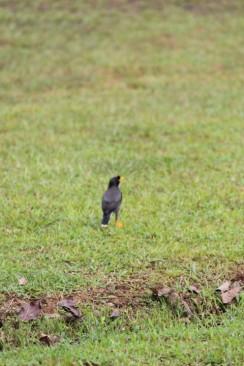 Banyak burung berterbangan